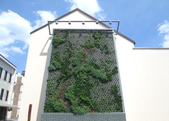 Fassadengarten Dillingen / Saar Peter-Lamar-Platz Fassadenbegrünung